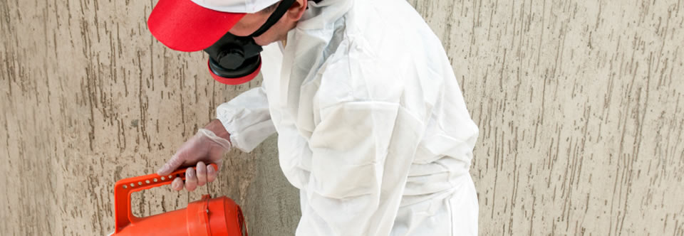 Protect surfaces from mold, bacteria, and related odours